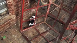 Кошечка на марокканском рынке, Аnimals,Tiere