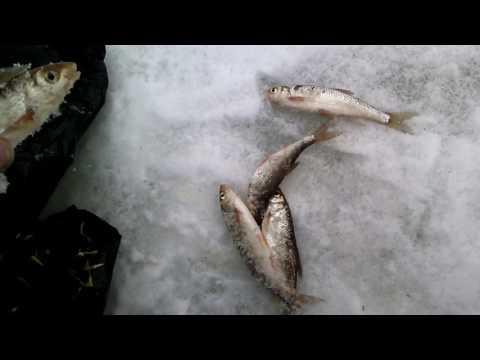 Рыбалка в Республике Коми. Март 2017 !