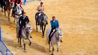 Испания, Аликанте, Отдых, Праздник, Выходной, Освещение животных, кони, собаки, кролики и т.д.