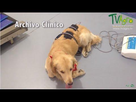 Tratamiento de Fisioterapia en Perros - TvAgro por Juan Gonzalo Angel