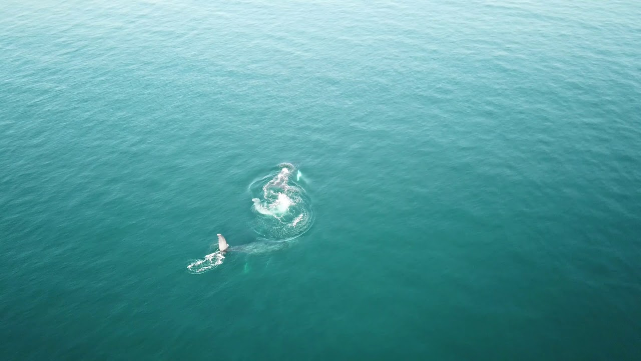 Whales In Tenacatita Bay Jalisco Mexico