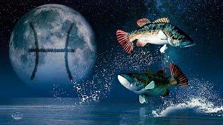 Рак и Рыбы: совместимость мужчины и женщины в любовных отношениях