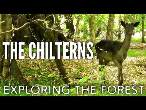 The Chilterns: Exploring The Forest. (Episode 2)