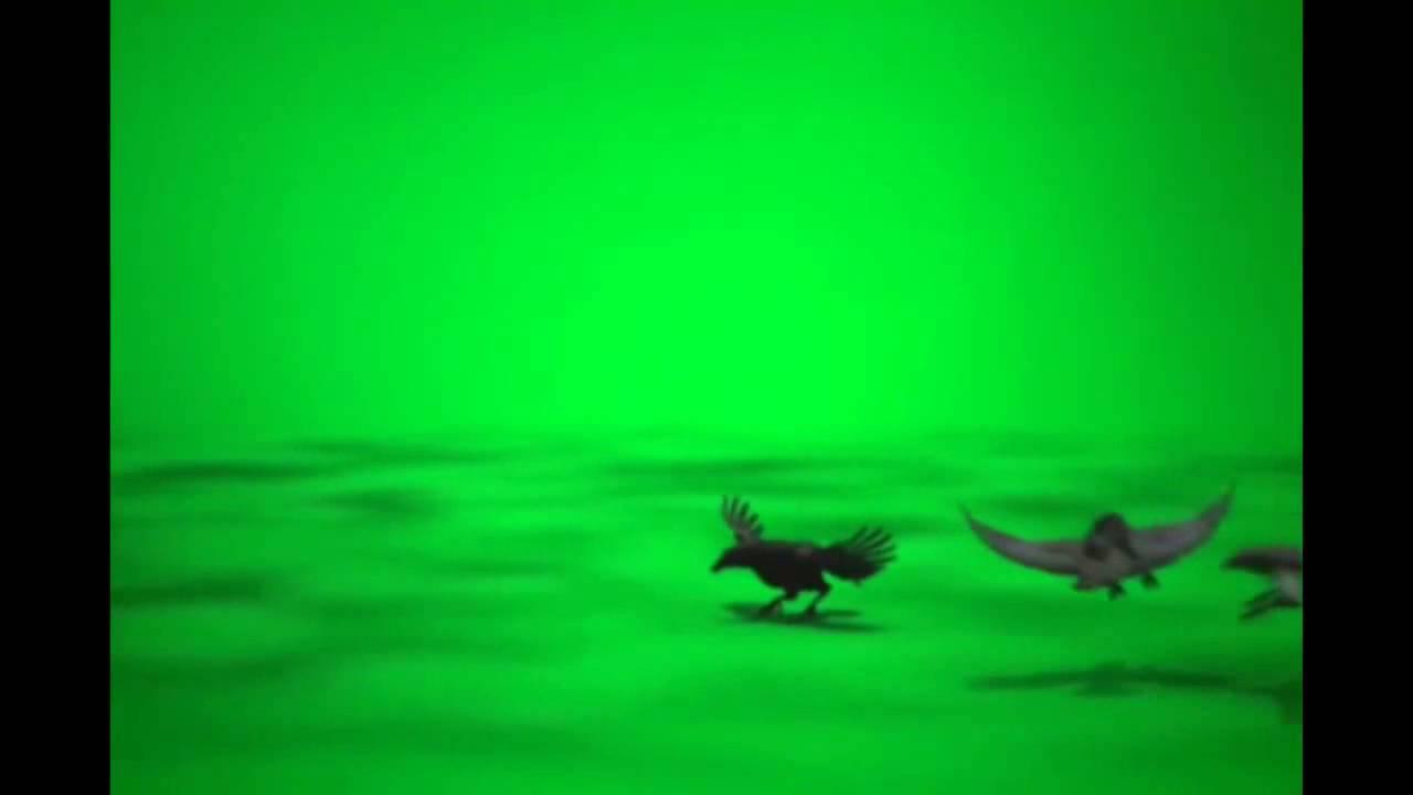 Скачать бесплатно звук карканье вороны