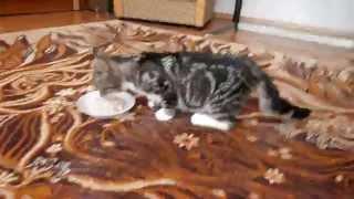 Chrupka - kotka z 4 złamanymi łapkami