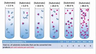 Effect of Substrate Concentration on the Rate of Enzyme-catalysed Reaction