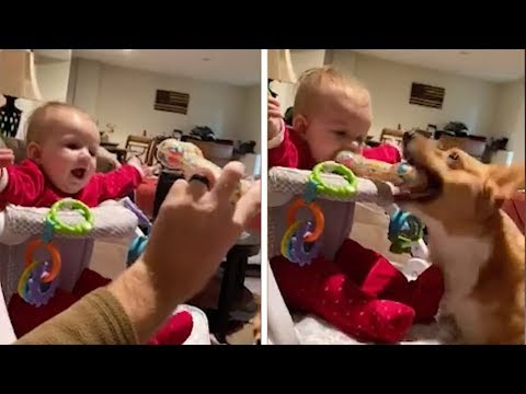 image for Puppy Steals His Toy Back From Baby