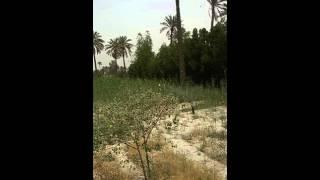 مكتب عقارات الوطن الجزيرة قرب جسر خالد