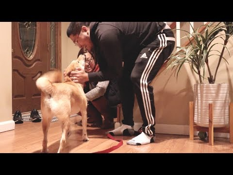 Dog's Reaction to Owners Coming Home after FIVE days!