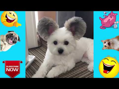 Funny Animal Videos ( CLEAN FOR KIDS )