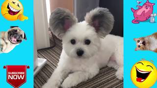 Funny Animal Videos * Compilation of Funny Pets
