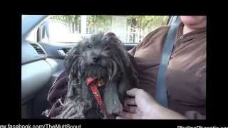 Heartwarming story of a rescued poodle  grab a tissue