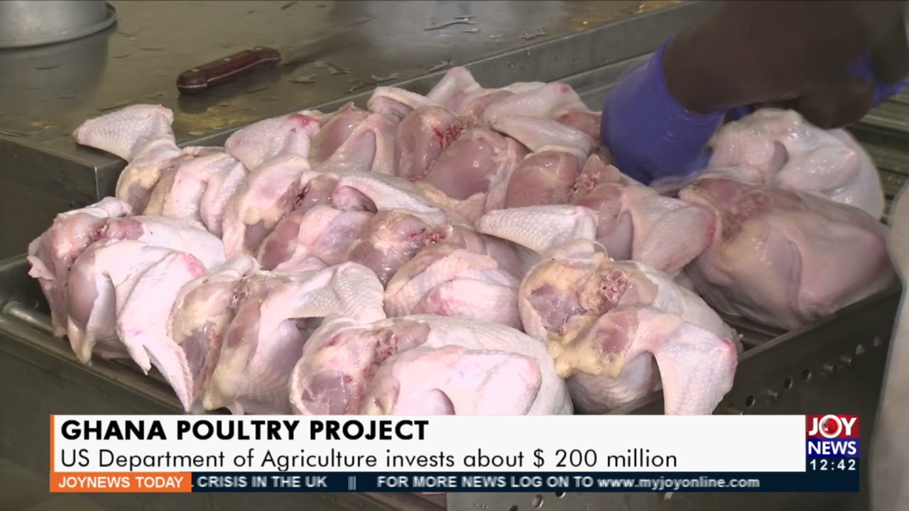 Download Ghana Poultry Project: US Department of Agriculture invests about $200 million -  Business (28-9-21)