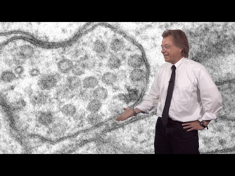 Erik Jorgensen (U. Utah / HHMI) 2: Recycling synaptic vesicles: Ultrafast endocytosis