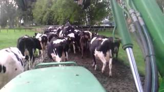 Dairy farming in matamata nz