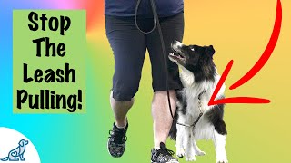 Loose Leash Walking Training - Professional Dog Training Tips