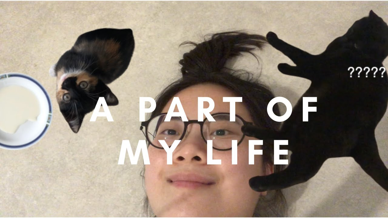 a vlog with catS | new family member