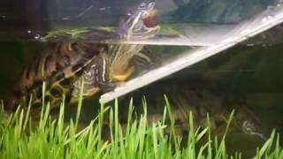 7) Аквариум-террариум для черепах своими руками. Зелень