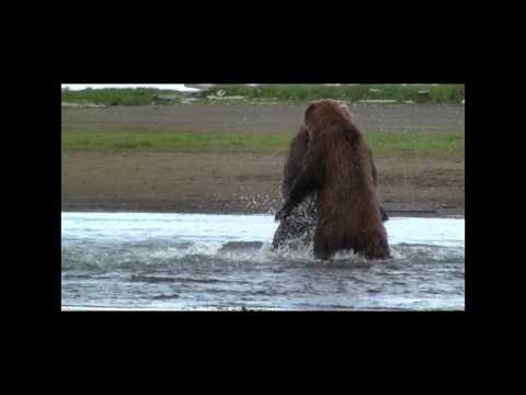 GRIZZLY FIGHT COMPILATION HD-  katmai, alaska,  Grizzly vs Grizzly, bear fight