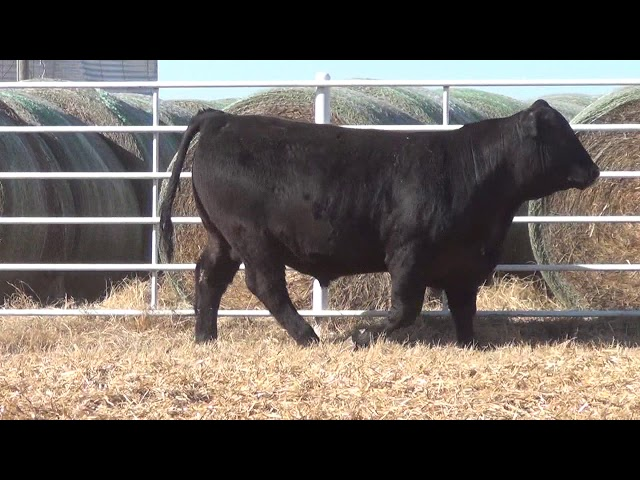 Express Ranches Lot 366