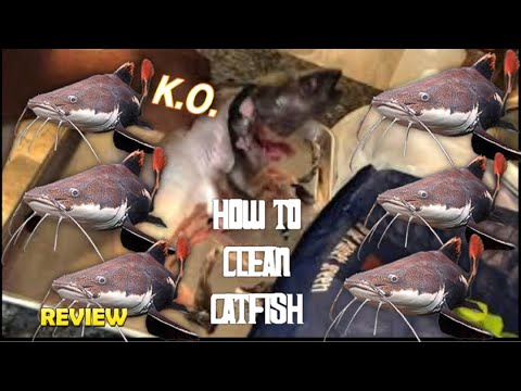 HOW TO CLEAN CATFISH!!!