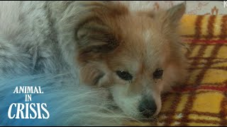 Abandoned Dog Misses His Grandmother With Dementia Who Went Missing | Animal in Crisis EP70