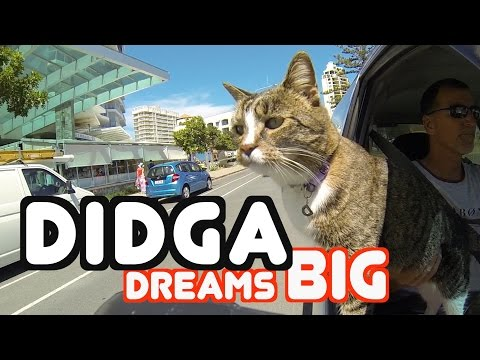 Didga Dreams BIG - Cats Amazing Trick Compilation