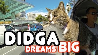 Didga Dreams BIG  Cats Amazing Trick Compilation