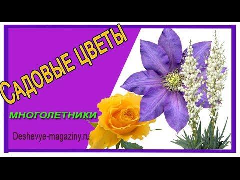 Луковицы и корневища многолетних растений. Купить в интернет-магазине semena. By с доставкой по беларуси почтой.