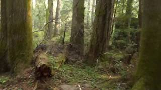 Trail to the Pygmy forest Mendocino county Part 4
