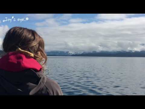 Whales and Dolphins Telegraph Cove Canada 2016