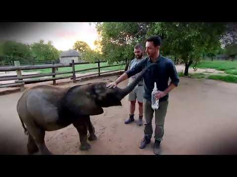 Elefante órfão Ganha Segunda Chance Para Sobreviver Em Abrigo Na África Do Sul