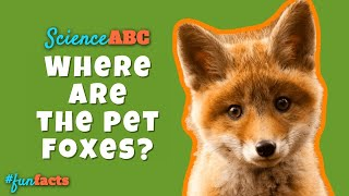 Why Don't We Have Pet Foxes?