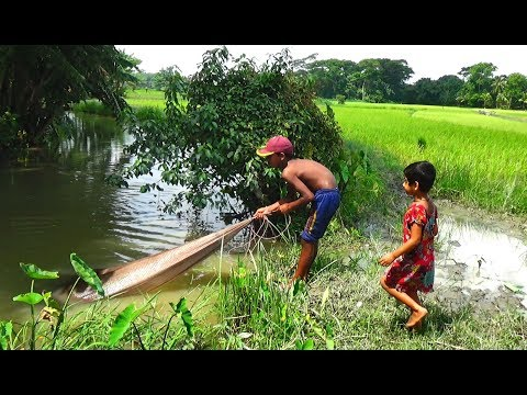 Net Fishing   Live Fish Hunting In village   Fishing with beautiful nature