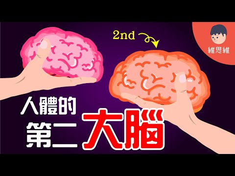 【健康小知識 】原來人體還有第二個大腦!它控制著你80%以上的情緒!(沒有CC字幕) | 維思維