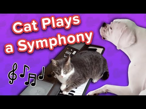 Lazy Cat on Piano & Squeaky Bulldogs! // Funny Animal Compilation