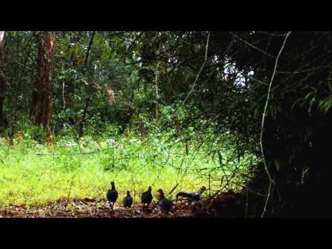 A Travel through the Parambikulam Tiger Reserve in Kerala.