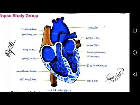 Heart - Ithayam - Tnpsc Digital Academy