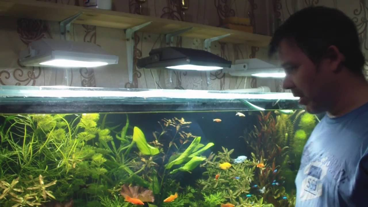 При оформлении аквариума очень важно правильно подобрать источник освещения. Это необходимо, чтобы обеспечить создание естественной.