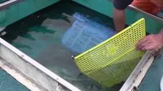 大型の活魚車の水槽は