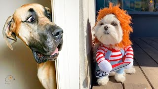 Unbelievable!!! Funny Dog Videos Try Not To Laugh ✔1