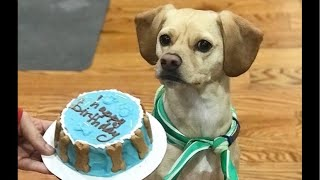 Live: Rescue Dog Celebrates Birthday at The Dodo thumbnail
