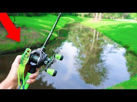 FROG Fishing TINY
