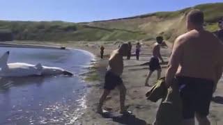 На Сахалине поймали гигантскую акулу-людоеда