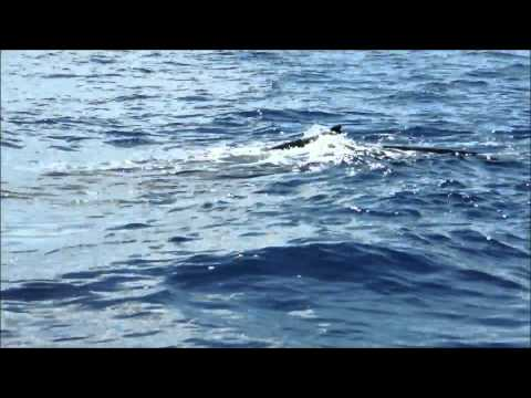 Great Whale Watching Maui Lahaina, Hawaii