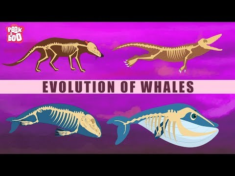 download Evolution Of Whales - The Dr. Binocs Show | Best Learning Videos For Kids | Peekaboo Kidz