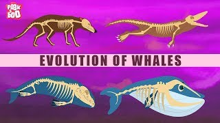 Evolution Of Whales - The Dr. Binocs Show | Best Learning Videos For Kids | Peekaboo Kidz