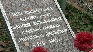 В Новгородской области поисковики обнаружили массовые захоронения времен Великой Отечественной войны