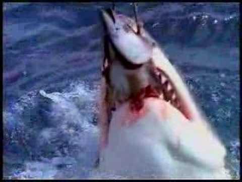 <サメ-Shark076->捕食3