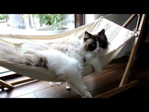 Cat Life in a Hammock